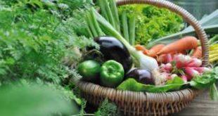 ortaggi per orto